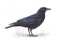 carrioncrow