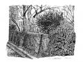 wall+ivy